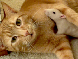 cat-and-rat